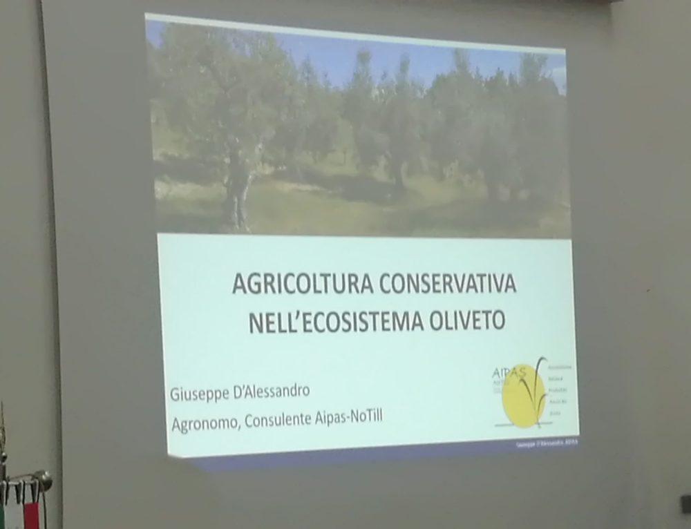 Gestione conservativa degli oliveti